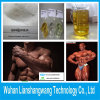 USP 99% Testosterone Enanthate (CAS 315-37-7) for Male Muscle Growth