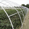 Rectangular Greenhouse for Sale Cheap Commercial Agricultural Greenhouse