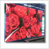 P4mm HD LED Video Display with Cabline Size 640X640mm