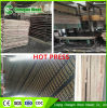 Wholesale 15mm Shuttering Plywood/Construction Plywood