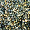 Polished Striped Pebble Stone for Decoration