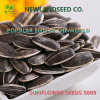 Sell Chinese Black Sunflower Seeds Market Price 5009