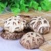 Good Quality Dried Shiitake Mushroom with Halal Certificate