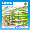 Easily Assembled Hot Sale Hydroponic Greenhouse for Agricultural