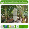 Resistant 3.5% UV Non Woven for Agriculture & Landscape