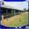 Sandwich Panel Prefab Steel Structure for Chicken Farm