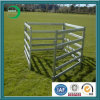 Livestock Corral Fence, Cattle Fence, Cattle Yard