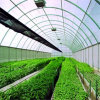 Factory Direct Selling Plastic Film Greenhouse with Low Price and Thermal Insulation