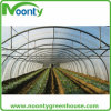 PE Film/Plastic Film Single-Span Film Vegetable Tent for Planting Tomato/Potato