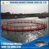 Aquaculture Fish Cages for Fish Farming in Volta Lake