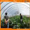 Hot Sale Hoop Greenhouse for Growing Vegetables