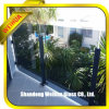 Tempered Laminated Glass for Fence/Partition/Swimming Pool/