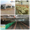 Automatic Broiler Machines in Poultry Shed From Super Herdsman