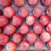 High Quality Red Color Qinguan Apple