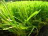 Dominate The Market, Environmentally Friendly for Football/Soccer Grass