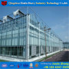 China Factory Glass Hydroponic Green House for Rose Farming