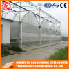 Commercial Multi-Span Flower/ Vegetable Plastic Film Greenhouse