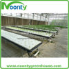 Commercial Dft Hydroponics Gutter System for Cucumber Growing with Farm Single and Multi-Span Plastic Film Greenhouse