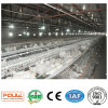 Poul Tech Broiler Chicken Cage with Full Automatic Equipment System (A Type)
