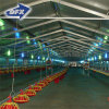 Cheap Steel Structure Warehouse/Workshop/Factory/Chicken Shed