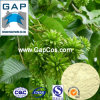 Camptothecine Plant Extract with Free Sample