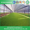 200 Micron PE Plastic Greenhouse for Vegetables Growing