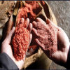 Fertilizer Potassium Chloride Mop Kcl Muriate of Potash