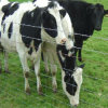 China Electric Cattle Fence for Sale