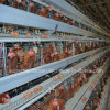 Layer Chicken Battery Cage Poultry Farming Equipment
