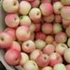 Fresh Red Gala Apple Top Quality From Golden Supplier