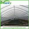 Single Tunnel Greenhouse for Farm and Agriculture with Hot-Galvanized Structures