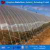 Hot DIP Galvanized Greenhouse Low Cost Greenhouse Agricultural Tunnel