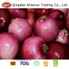 Peeled Purple Onion with New Crop
