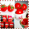 Our Tomato Paste in Tinned -- Your First Choice of All