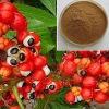 Guarana Seed Extract Guarana Extract Powder 10% 20%