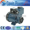 Hot Sale Clean Water Pump (DGP)