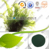 FDA Wholesale Plant Powder 60%-70% Protein Spirulina