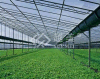Greenhouse Polycarbonate Hollow Sheet Folha Do Policarbonato Hollow Sheet (YM-PC-025) for Building Material