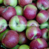 New Crop Red Jiguan Apple with Carton Packing