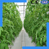 Hydroponic System for Vegetables and Fruits