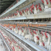 Jinfeng Farm Equipment (Cage for Chicken)