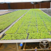 Aluminum Alloy Frame Seedbed for Agricultural Greenhouse