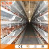 Turn-Key Poultry Layer Farm Equipment From Factory with Steel Shed Construction