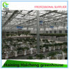 2017 New Type Agriculture Greenhouse