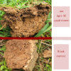 Newsun Agri-Sc Soil Improvement