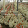 Automatic Poultry Farming Equipment for Breeder House