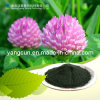 Red Clover Extract (CAS: 479-13-0)