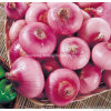 Good Quality New Crop Onion