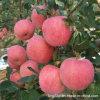 New Crop High Quality Fresh FUJI Apple