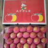 Fresh 138-198 Size Plastic Bagged Red FUJI Apple for Bangladesh